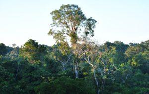 Blick über den Urwald
