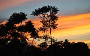 Sonnenuntergang im Amazonas-Urwald