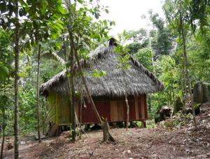 Grosse Hütte im Urwald